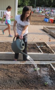 pic5.watering