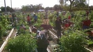 GardenOct3