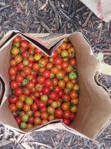 w11.bag.tomato