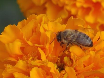 w14.bee.closeup