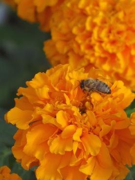w14.bee