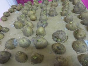 s16w1.potatoes