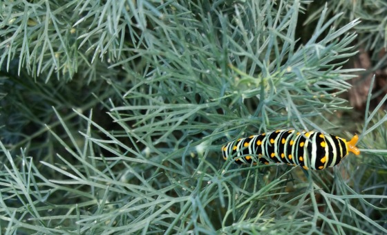 sp16w4.caterpillar
