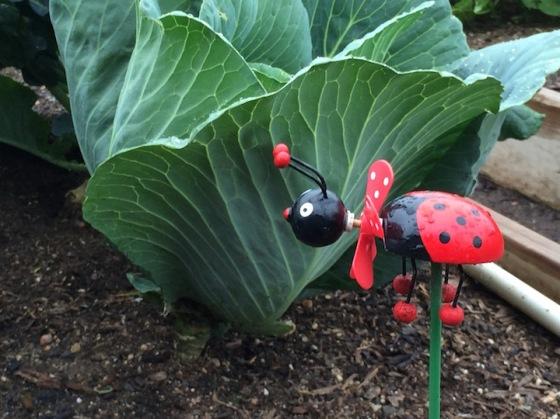 cvg16w10.ladybug.fake