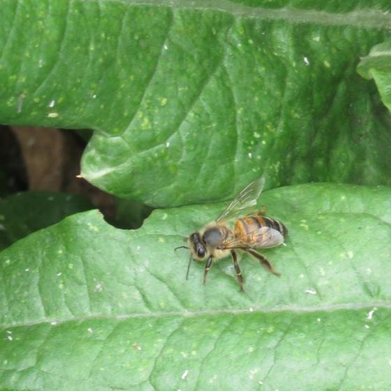 s16w6.bee