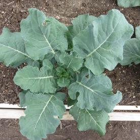 s16w6.broccoli