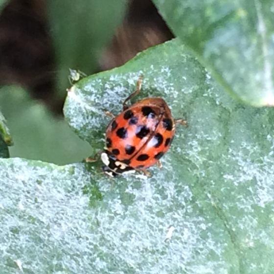 s16w6.ladybug