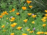 s16w6.wildflower2