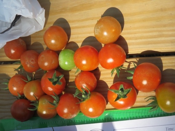s16w11.cherryTomatoes