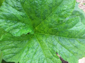 s16w11.squash leaf.virus