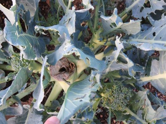 s16w12.broccoli.byebye