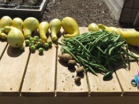 s16w12.harvest