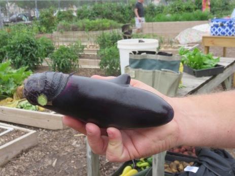 s16w14.dolphinEggplant