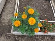 s16w15.flower.mysteryMarigold