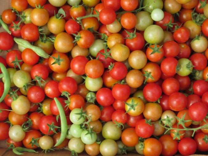 s16w15.harvestC