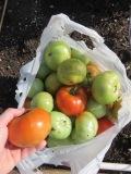 s16w16.harvest3
