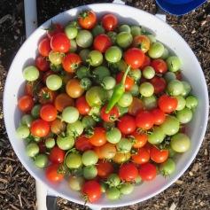 s16w16.harvest4