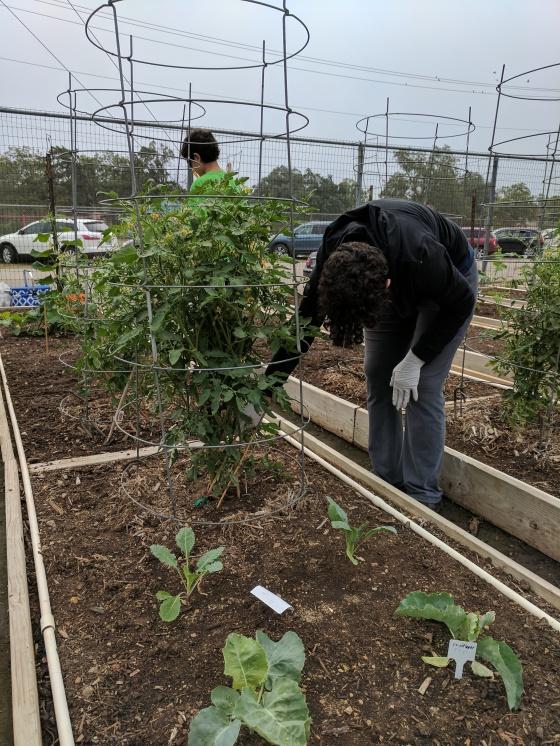 check tomato.jpg
