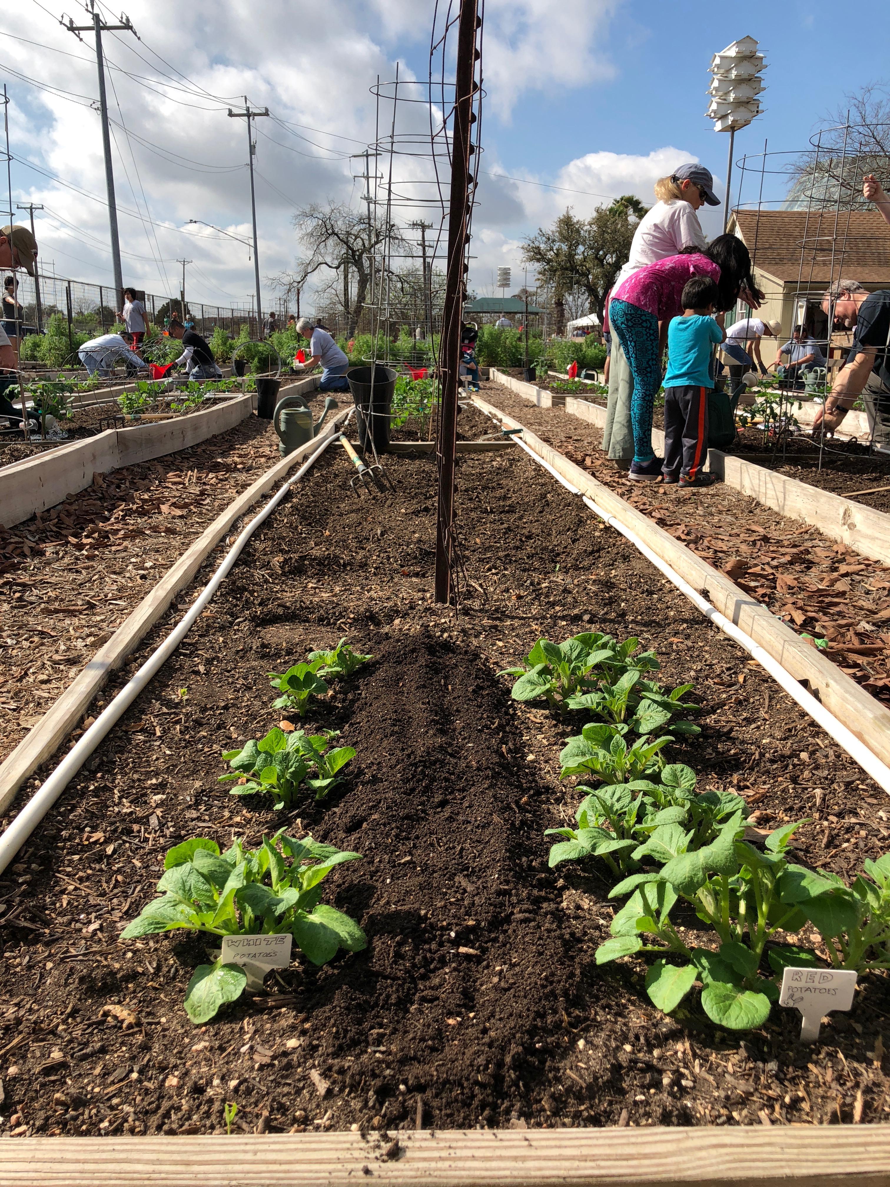 Children\'s Vegetable Garden Program Blog | Growing Good Kids in ...