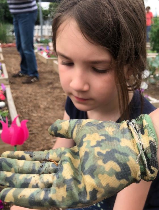Army worm.jpg