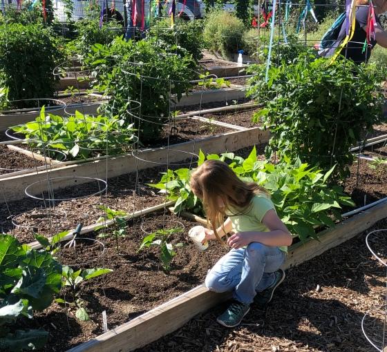 fertilizing eggplant