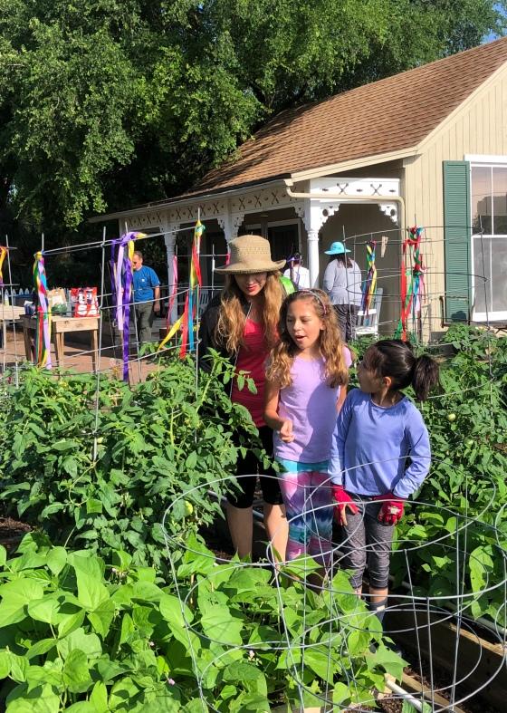 tomatoes week 10