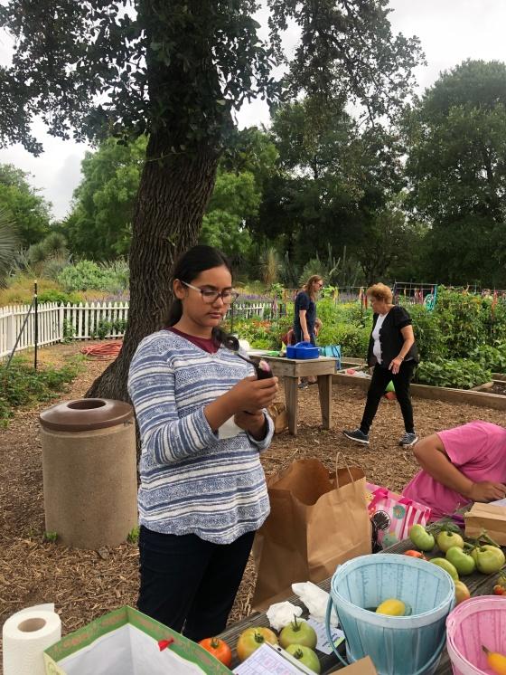 Evaluating eggplant